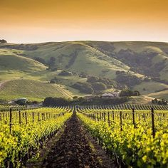 CAs Wine Country   20th Anniversary Trip - 2014