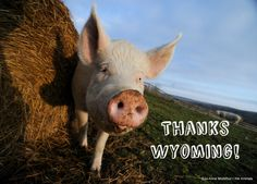 VICTORY! Because all of YOU spoke up, Wyoming scrapped the bill that would have made it illegal for undercover investigators to expose factory farm abuse!