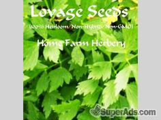 Lovage Heirloom Herb Seeds, Order now, FREE shipping in San Francisco CA - Free San Francisco SuperAds