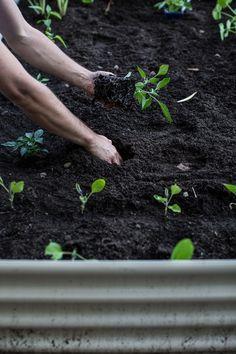 Planting A Spring Veggie Garden