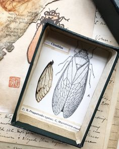 Boxed Collections 2019 The Naturalist Natural World, Natural History, Weird And Wonderful, Mixed Media Collage, Butterfly Wings, Botanical Art, Vintage Flowers, Art Boards, Wasp