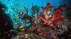 תוצאת תמונה עבור corals