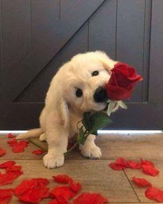 Super Cute Puppies, Baby Animals Super Cute, Cute Baby Dogs, Cute Funny Dogs, Cute Little Puppies, Cute Dogs And Puppies, Cute Little Animals, Cute Funny Animals, Doggies