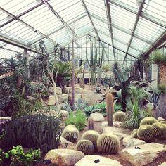 "@Amy Lyons Lyons Lyons Lyons Rhodes's photo: ""Heaven #cacti #greenhouse #kew #london"""