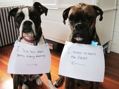 Dog shaming is the only way to teach these pooches a lesson. Check out the hilarious compilation of dog shaming photos. Funny Animal Pictures, Dog Pictures, Funny Animals, Animal Funnies, Baby Animals, Animal Pics, Dog Photos, Animal Memes, Boxers