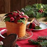 Williams and Sonoma ...a cake......a poinsetta cake