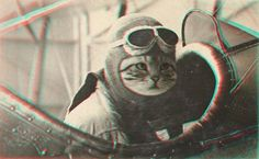 haha pilot kitty!
