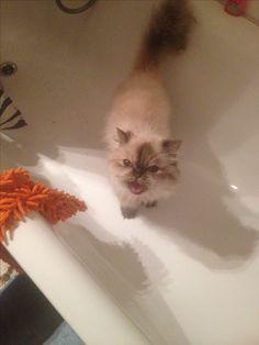 Katze in Badewanne