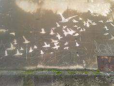Birds created by cleaning shape off dirty stone facade. Bristol old Police Station. Unusual graffiti.