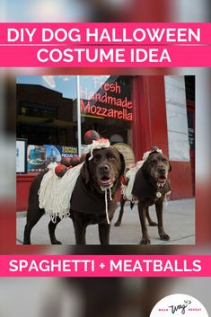 I had the idea to dress my two chocolate labradors up as Spaghetti and Meatballs for Halloween! This DIY costume is made with felt, yard and foam craft balls. If you love to eat, or if you're Italian, this is the perfect DIY dog Halloween costume! This dog costume is so unique, you will not see anyone else with it! Stand out as Spaghetti and Meatballs! This costume is dog walk friendly (although you might loose a few meatballs!). Halloween Costumes To Make, Dog Costumes, Halloween Ideas, Chocolate Labradors, Chocolate Labs, Fun Diy, Easy Diy, Dog Washing Station, Durable Dog Toys