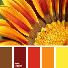 Sunflower is a miniature of a sun on the earth with a rich range of hues from yellow-orange to burgundy. Brown hue perfectly completes swirl of monochrome orange palette. Red-orange palette allows designers who are not afraid of bright colors in the inter Orange Palette, Orange Color Palettes, Red Color Schemes, Red Colour Palette, Color Combos, Sunset Color Palette, Color Concept, Color Balance, Balance Design