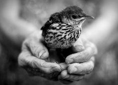 Bird in the Hand....