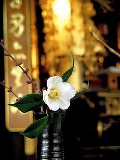 Ikebana, flower arranging.
