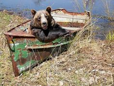 Doesn't look like this boat will get you far Mr. Bear