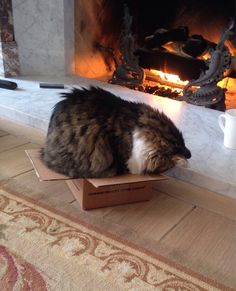 """""""Cats are cute.  Cats in boxes are even cuter.  They know this and make the most of it."""" --Anonymous"""