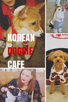 Doggie cafe in South Korea
