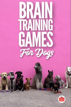 Keep your dog mentally sharp with brain training for dogs, including 7 mental stimulation games for dogs that will help keep them busy.