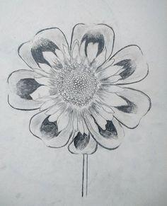 Drawing flower #sketch #draw #diy #flower