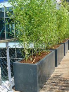 bamboo in planter Garden Privacy, Garden Landscaping, Diy Pergola, Small Gardens, Outdoor Gardens, Patio Grande, Bamboo Planter, Night Garden, Garden Deco