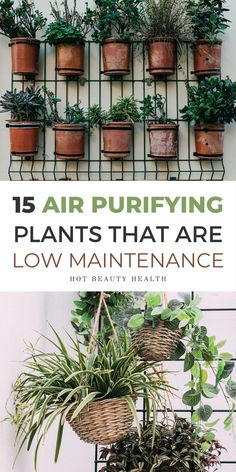 The best air purifying plants that are super low maintenance and hard to kill. According to NASA, these types of houseplants (i.e. sansevieria trifasciata, peace lily, etc) are non-toxic and cleanses the air (perfect for asthma and allergy sufferers). Some even remove air-borne mold. Place anywhere inside your home as decor like bedrooms, bathroom and kitchen or at the office. Many need don't need the sun to thrive indoors and are also pet safe. #houseplants #airpurifyingplants #plants