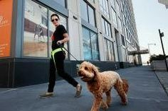 Upscale apartments are going to the dogs - Yahoo! Homes