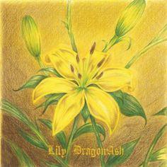 Dragon Ash (Lily)