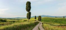 Gladiator's road