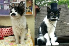 BEST FACE FURRRWARD: 16 Cats With Flawless Mustaches | Cuteness.com