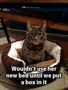 Add a box to a cat's bed...