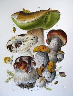Forest Bouquet II by Alexander Viazmensky Botany Illustration, Illustration Botanique, Forest Illustration, Nature Illustrations, Botanical Drawings, Botanical Prints, Mushroom Paint, Impressions Botaniques, Mushrooms