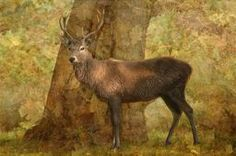 The Stag Party Collection, Autumn Shade - by Linsey Williams  #stagparty #uniquegifts #animalart @lin_dies