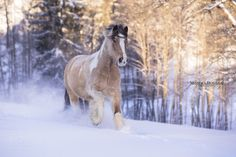 Horses In Snow, Wild Horses, Beautiful Horses, Animals Beautiful, Horse Markings, Icelandic Horse, Draft Horses, Equine Photography, Doge