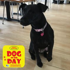 Izzy Great Yarmouth, Dog Friends, Dog Days, Dogs, Animals, Animaux, Doggies, Animal, Animales