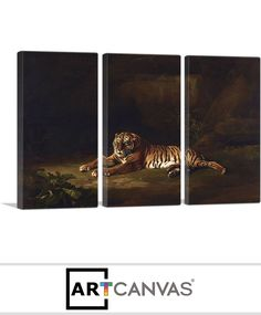 Ready-to-hang Tiger 1770 Canvas Art Print for Sale canvas art print for sale. Free hanging accessories and insurance. Art Prints For Sale, Canvas Art Prints