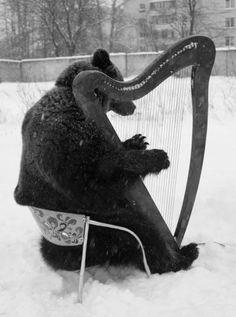 Russian bear plays harp.  (via EnglishRussia1)
