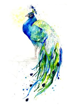 Peacock III by Amy Holliday #artwork