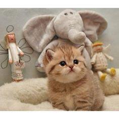 #Cats  #Cat  #Kittens  #Kitten  #Kitty  #Pets  #Pet  #Meow  #Moe  #CuteCats  #CuteCat #CuteKittens #CuteKitten #MeowMoe      Awww ...   https://www.meowmoe.com/28318/