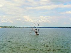 Lake Fork Resort, located near the 515 bridge Lake Fork, Free Gas, Rv Parks, Pond, Swimming Pools, Texas, Beach, Water, Bridge