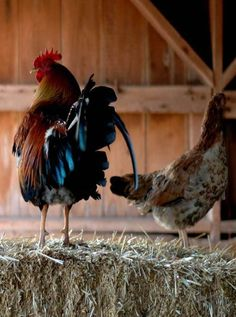 Rooster & Hen On A Bale Of Hay