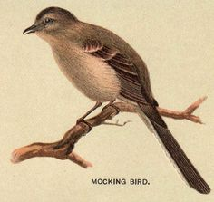 Vintage Mockingbird By HauntingVisionsStock On DeviantArt
