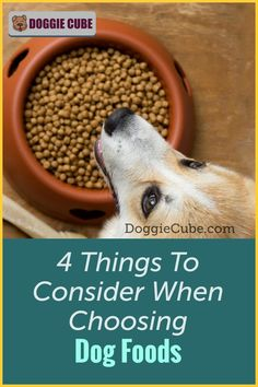 There are several factors to consider when choosing the right food for your dog. Different dogs have different nutritional needs at different stages in their lives. Here are some things to consider when selecting the food you'll give your dog. Dog Nutrition, Different Dogs, Guide Dog, Dog Care Tips, Homemade Dog Food, Nutritious Meals, Dog Grooming, Factors, Dog Training
