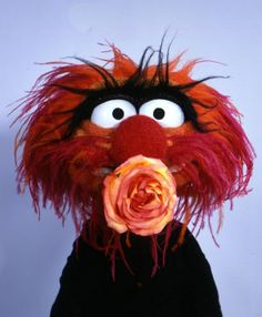 The Muppets on