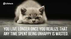 10 Surefire Ways To Be Unhappy in Life Are there times when you feel beaten up and let down by life? Unhappy Life, Kids Lying, Kitten Wallpaper, Schrodingers Cat, Pet Supplements, Cat Walk, Smart People, Cute Cats, Adorable Kittens
