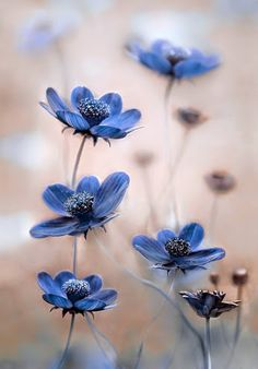 Hottest Free of Charge Blue Flowers photography Ideas Will you be holding an outdoor in the backyard? People unquestionably target to make it livelier plus more in My Flower, Pretty Flowers, Wild Flowers, Exotic Flowers, Photos Of Flowers, Cosmos Flowers, Flower Pictures, Beautiful Flowers Pics, Prettiest Flowers