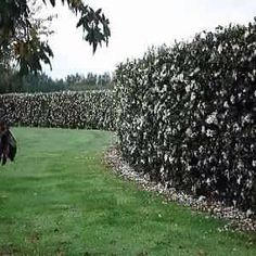 Gardenia Living Privacy Wall
