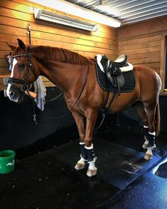Just how To Choose The Right Equestrian Horse Riding Shoes - Basic Guide About Horse Cute Horses, Pretty Horses, Horse Love, Beautiful Horses, Types Of Horses, English Riding, Horse Girl, Horse Pictures, Horse Breeds