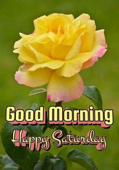 Good Morning Sunday Images, Saturday Images, Good Morning Happy Saturday, Good Morning Flowers Gif, Saturday Quotes, Cute Good Morning, Good Morning Messages, Good Morning Greetings, Morning Prayer Quotes