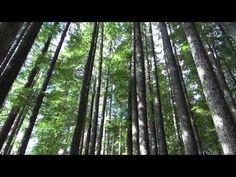 Video Washington State: Mt Rainier National Park | traveLink