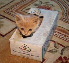 Petit chat, petit carton