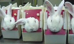 Expérimentation animale | GAIA